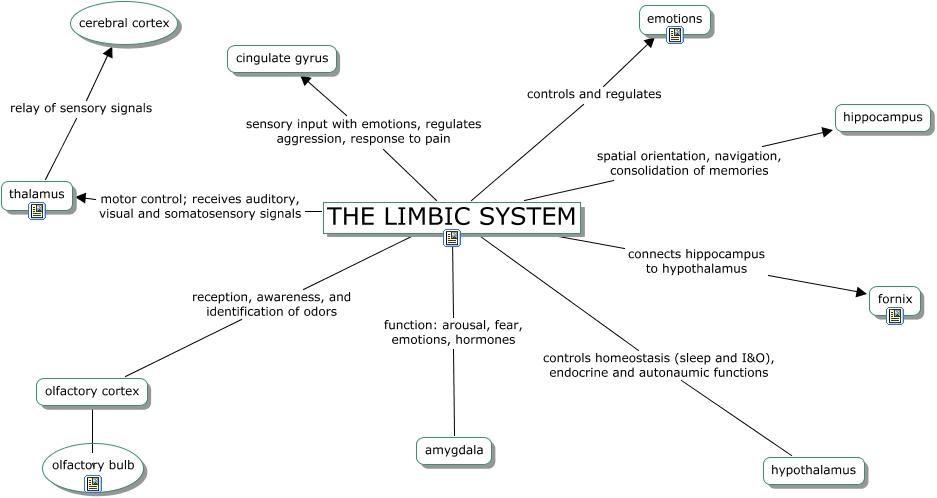 RING-Limbic system