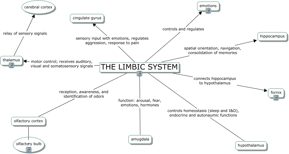 RING-Limbic system