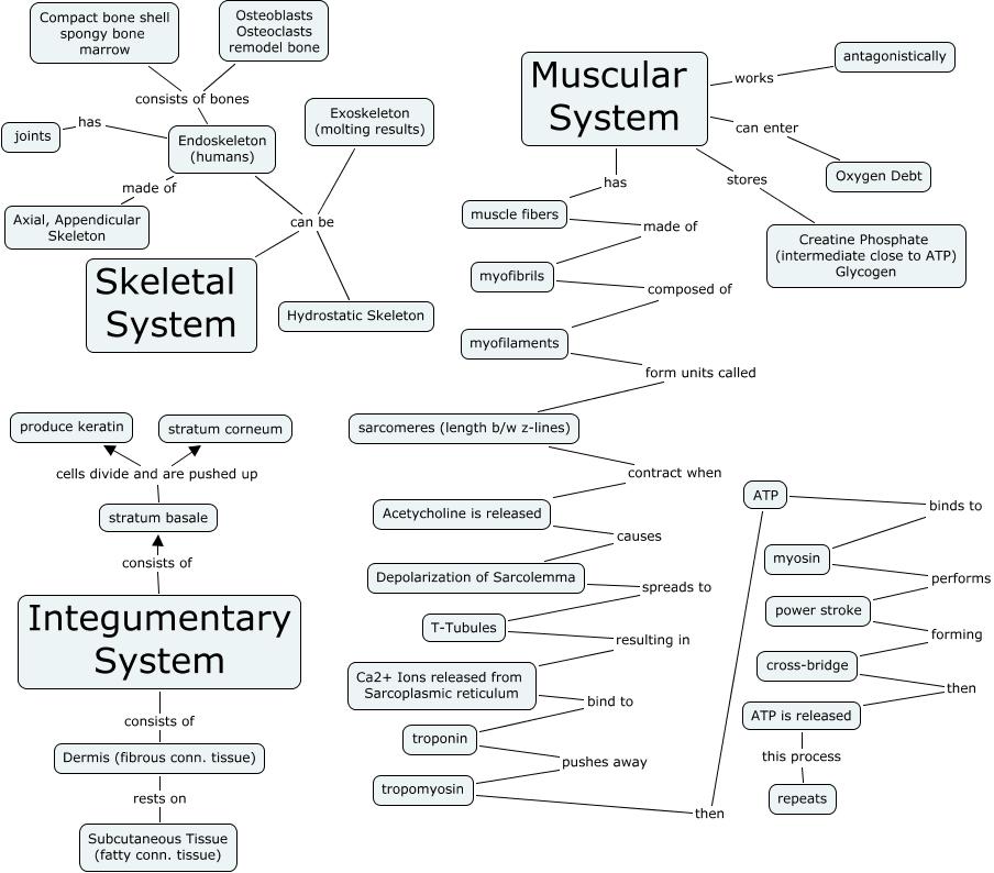Oakley Skeletal Support System City Of Kenmore Washington