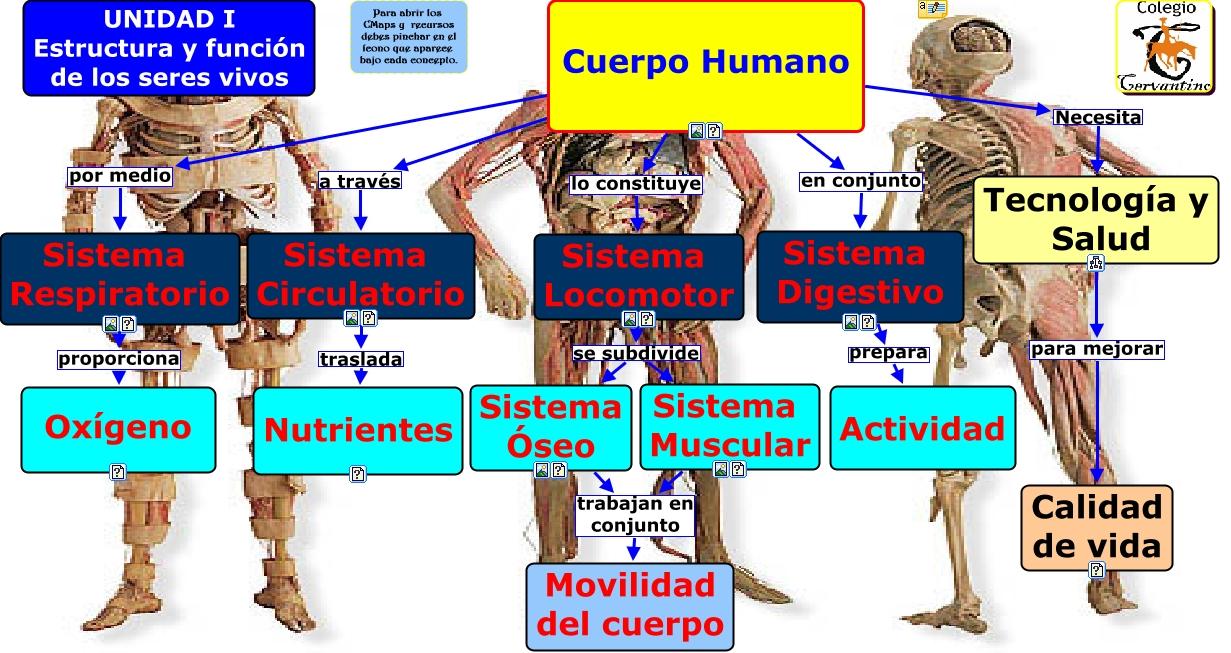 Unidad 1 Sistemas del cuerpo humano