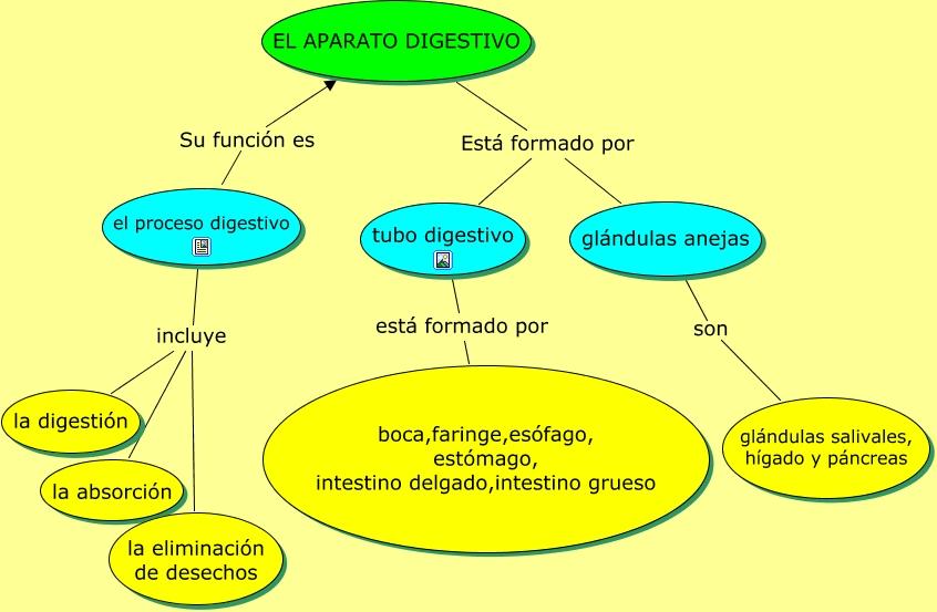EL APARATO DIGESTIVO - Funciones del proceso digestivo
