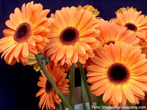 Grupo4 anatoplantas - Plantas de interior con flor ...