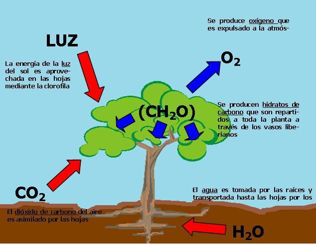 Importancia del atp en la fotosintesis