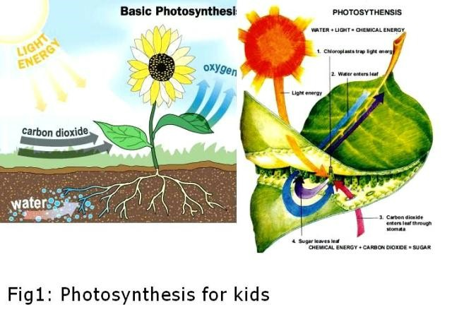 Photosynthesis diagrams worksheet college paper service photosynthesis diagrams worksheet every cook needs ingredients to make a meal photosynthesis diagrams worksheet answer key ccuart Images
