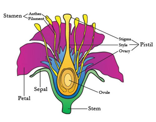 Pink parts female anatomy