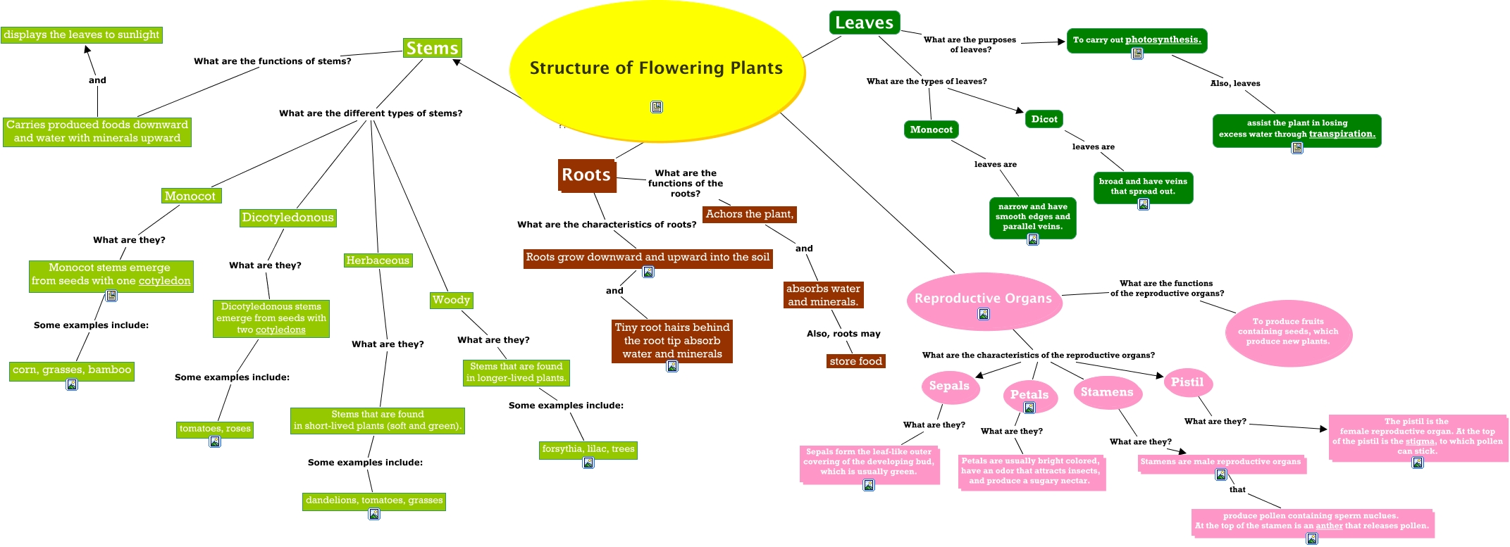 Flower Concept Map.The Structure Of Flowering Plants