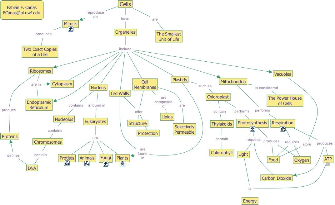 IHMC CmapTools   Concept Map :: Cells