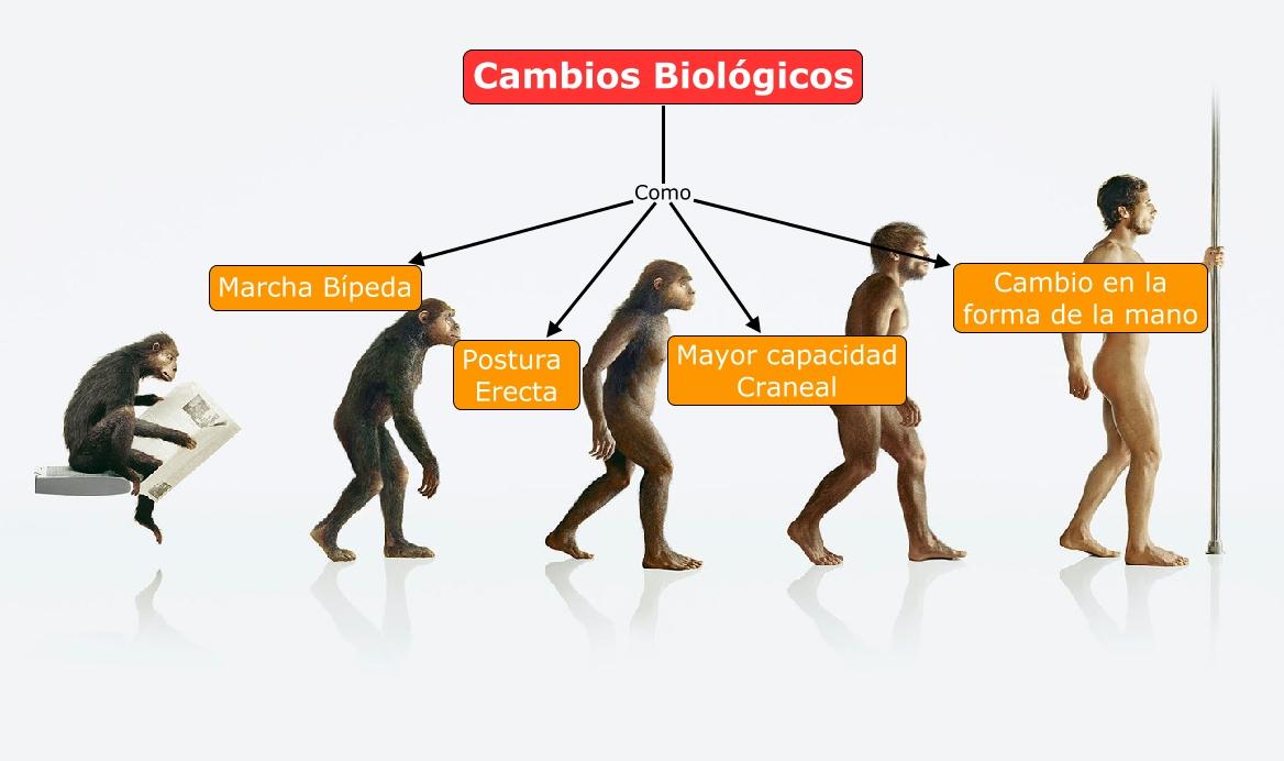 Cambios Biologicos