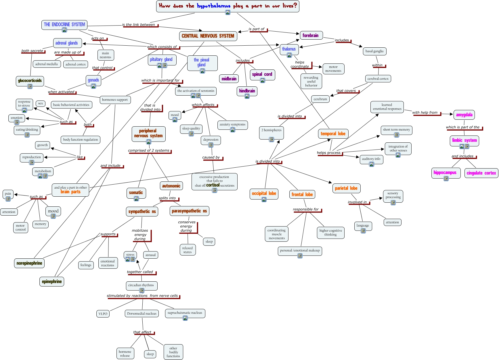Endocrine System Concept Map - 634.6KB