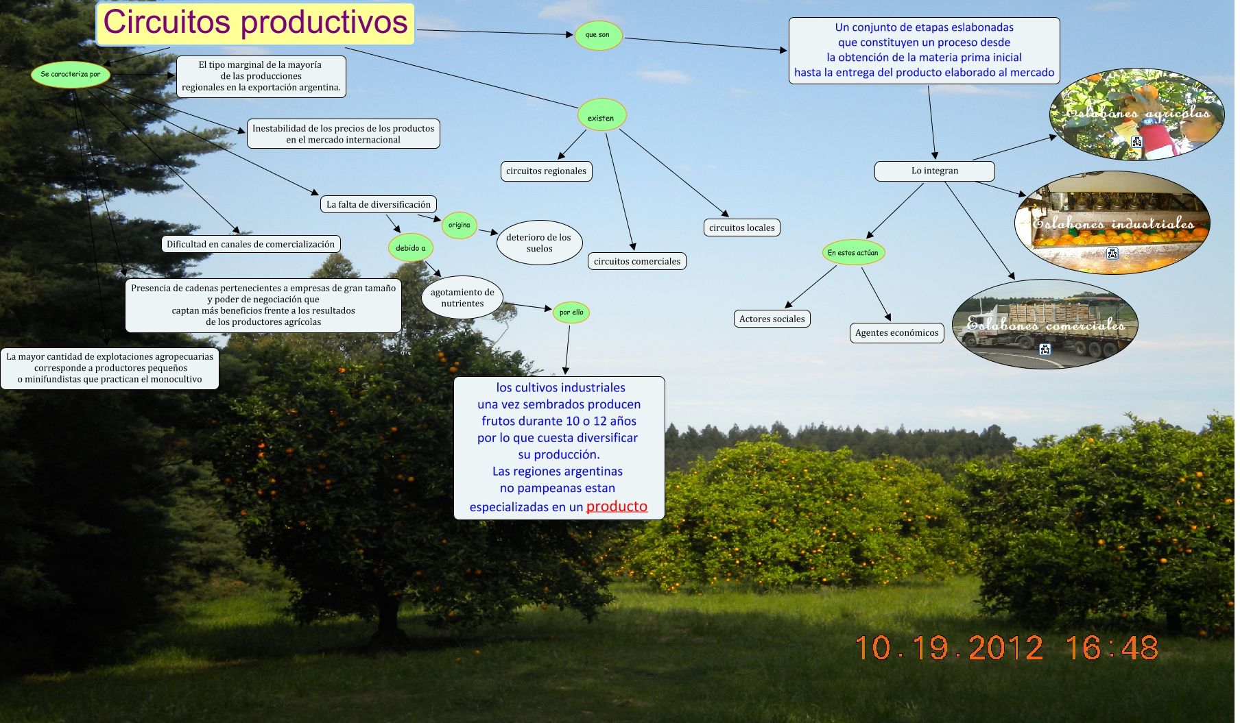 Circuito Yerbatero Argentina : Circuito productivo
