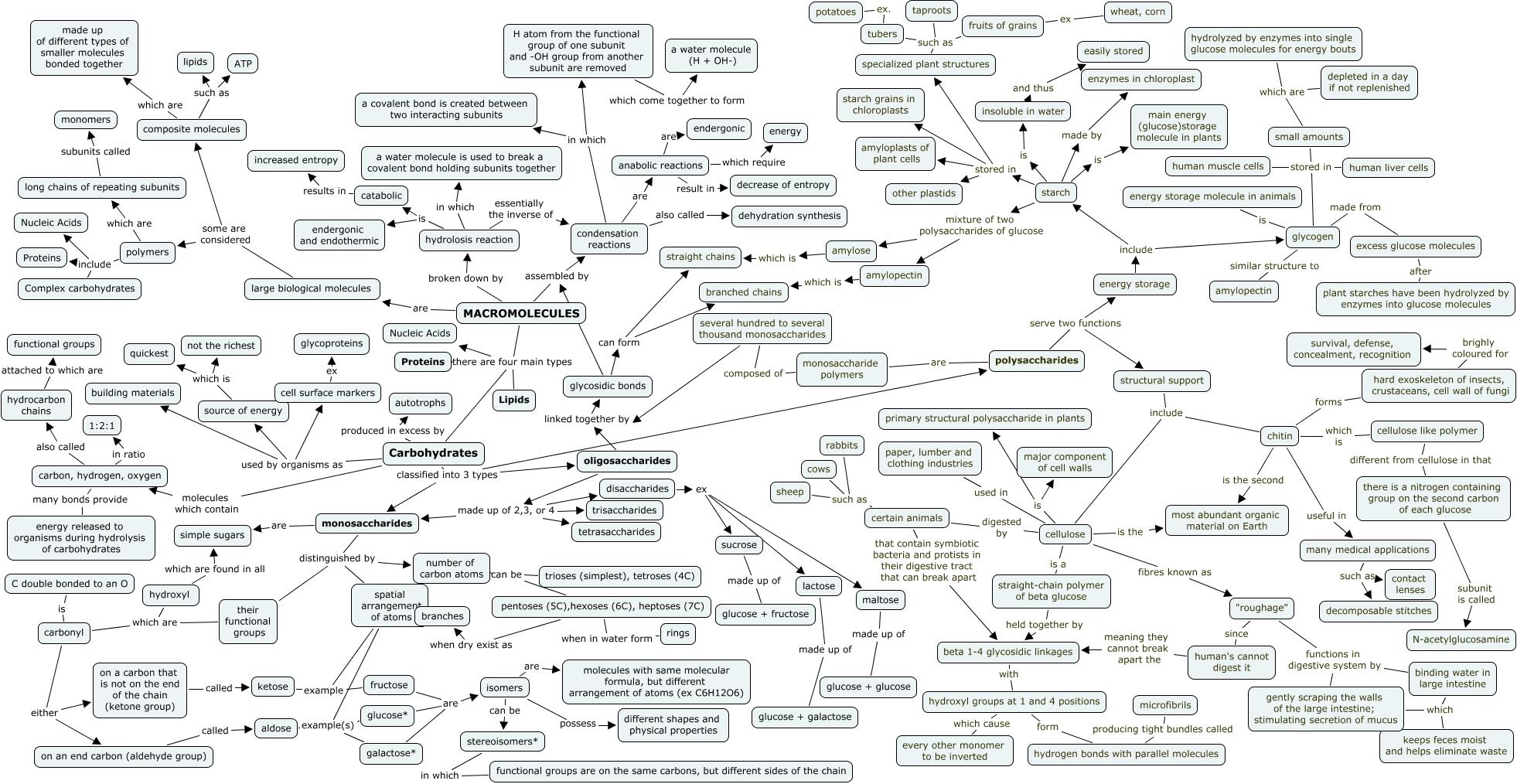 Concept Map Of Macromolecules.Macromolecule