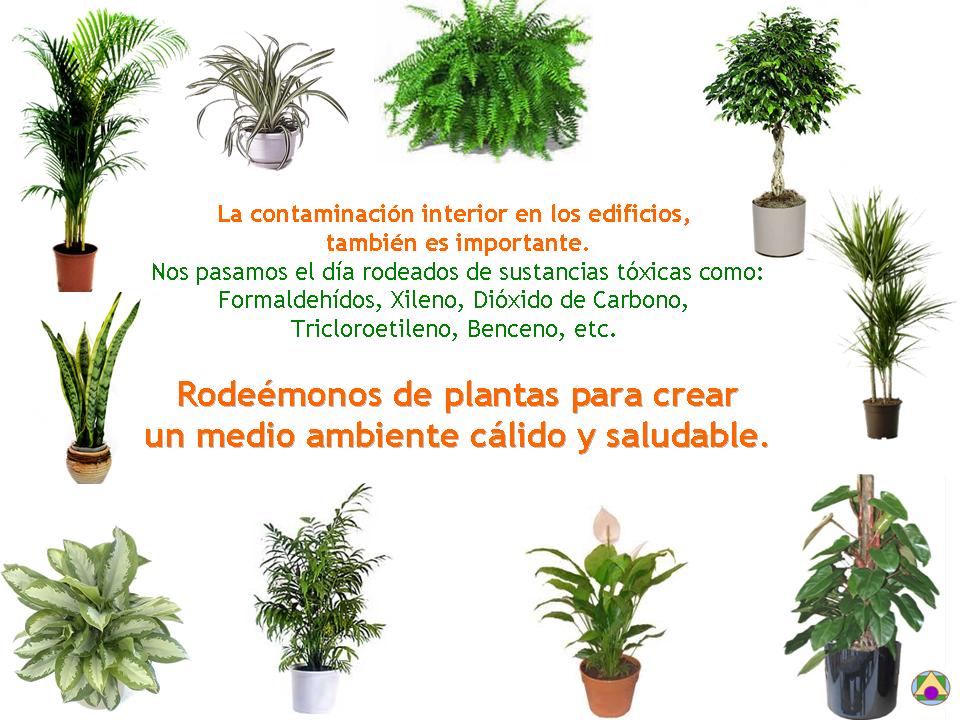Usos de las plantas - Plantas para el exterior ...