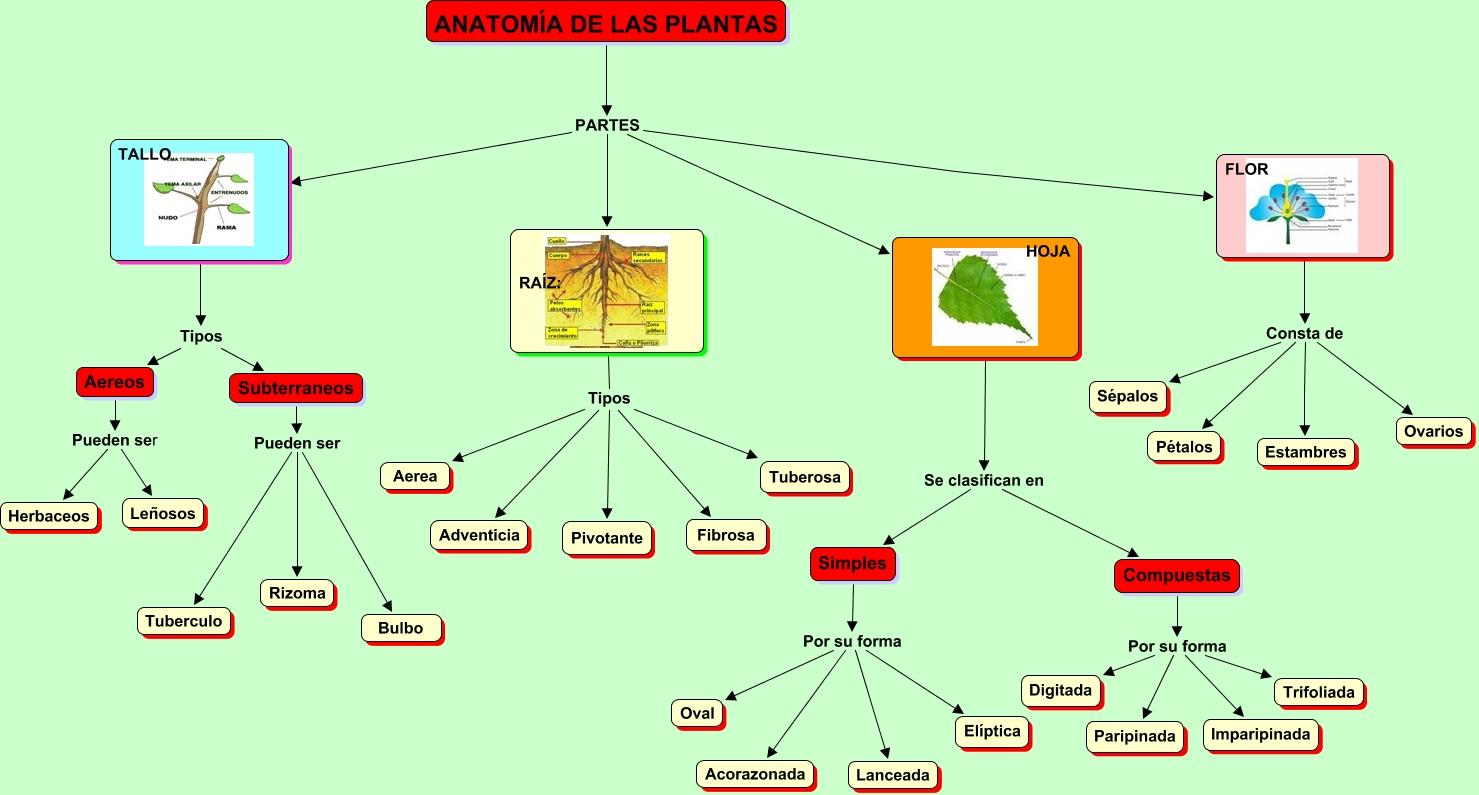 Anatomía de las plantas