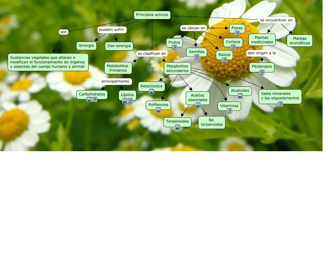 Mapa Conceptual Seminario