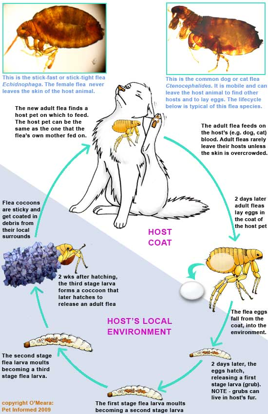 How Long Does Distemper Vaccine Last In Cats