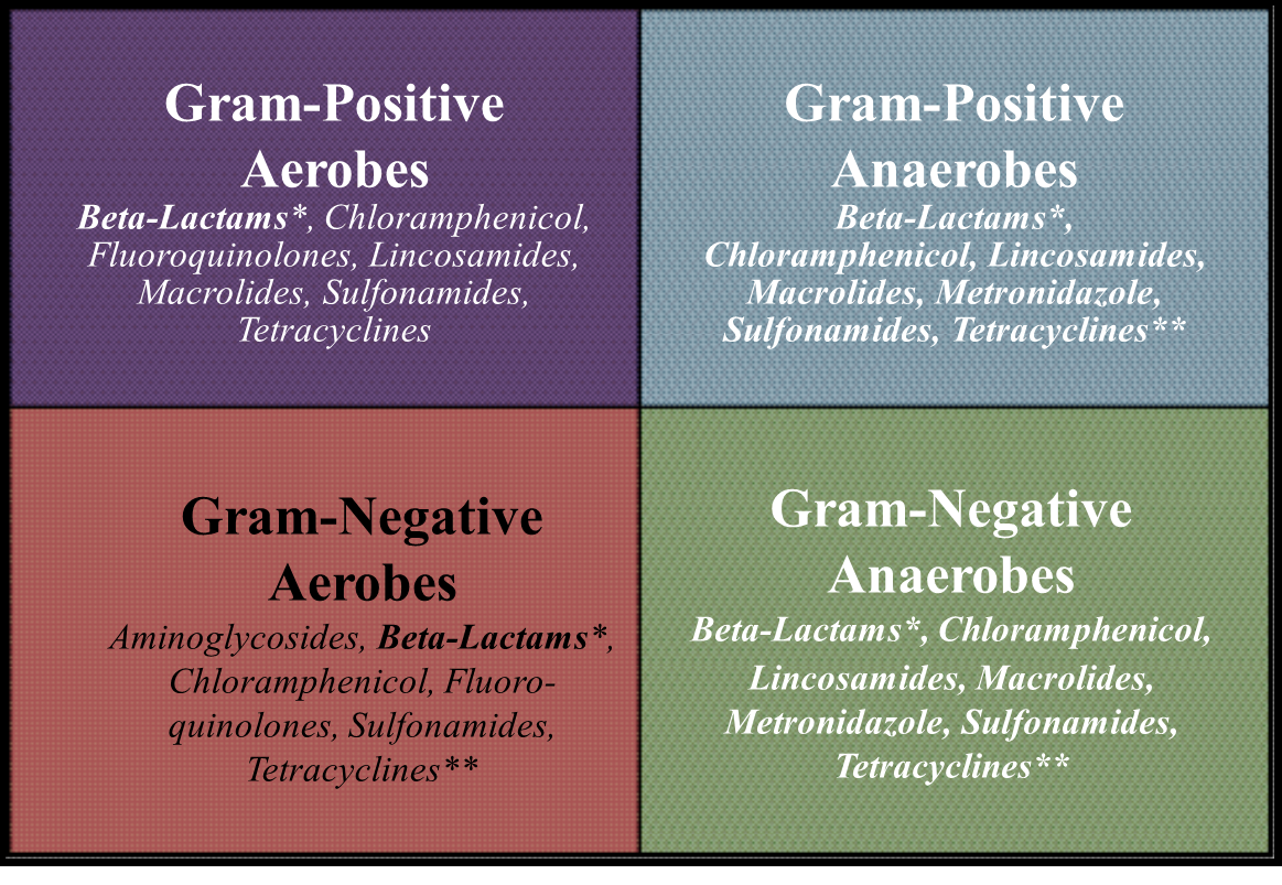 Cheat Sheet For Antibiotics : Spectrum20of20Activity from facememe.men size 1163 x 803 png 773kB