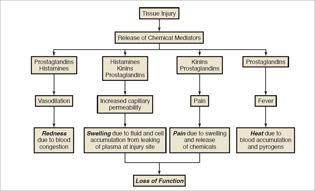 Antiinflammatory And Pain Reducing Drugs