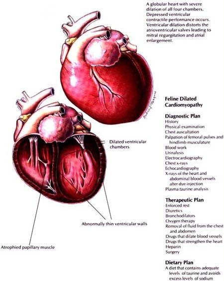 Cardiovascular Pharm 1