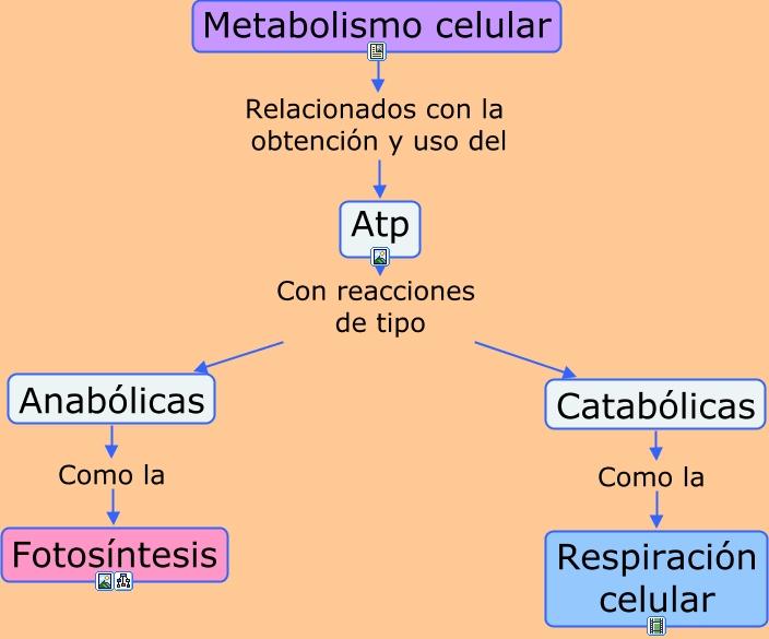 metabolismo de las proteínas va a parar nunca?