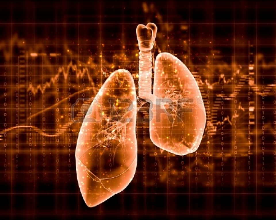 Schematic Illustration Of Human Lungs With The Different Elements On A Colored Background Collage