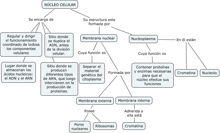 Núcleo Celular Cmap
