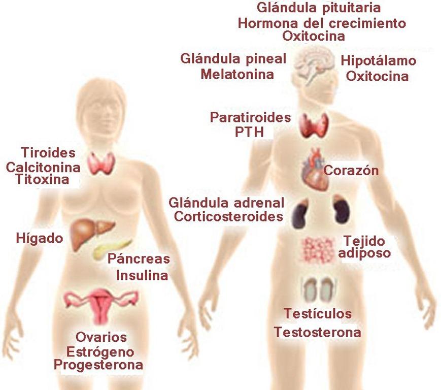 Excelente Ubicación Del Hígado En Mujeres Fotos - Anatomía de Las ...