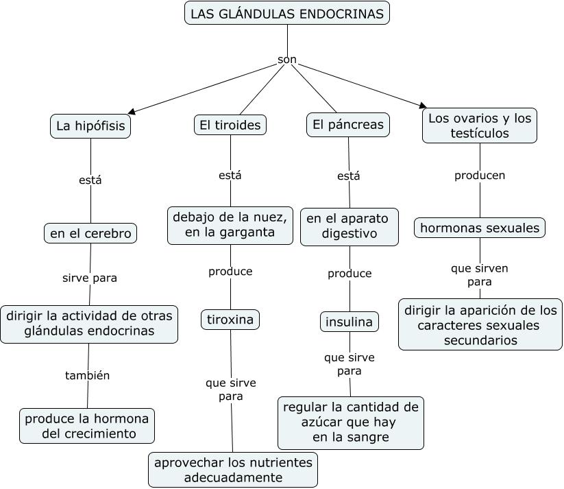 Las glándulas endocrinas.cmap?rid=1NDST99YX-26YDWN5-29XR&partName=htmljpeg