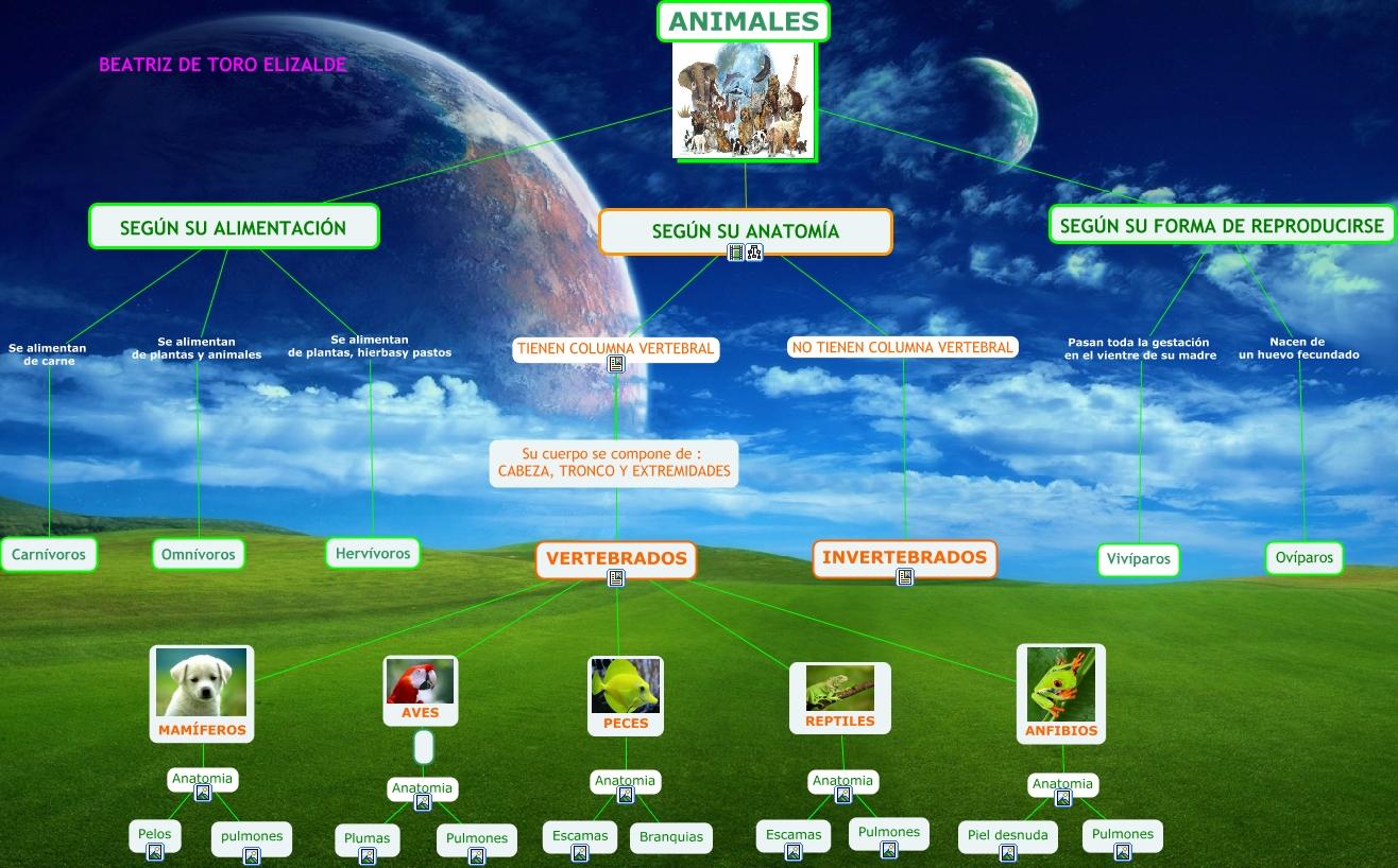 TIC mapa conceptual animales vertebrados