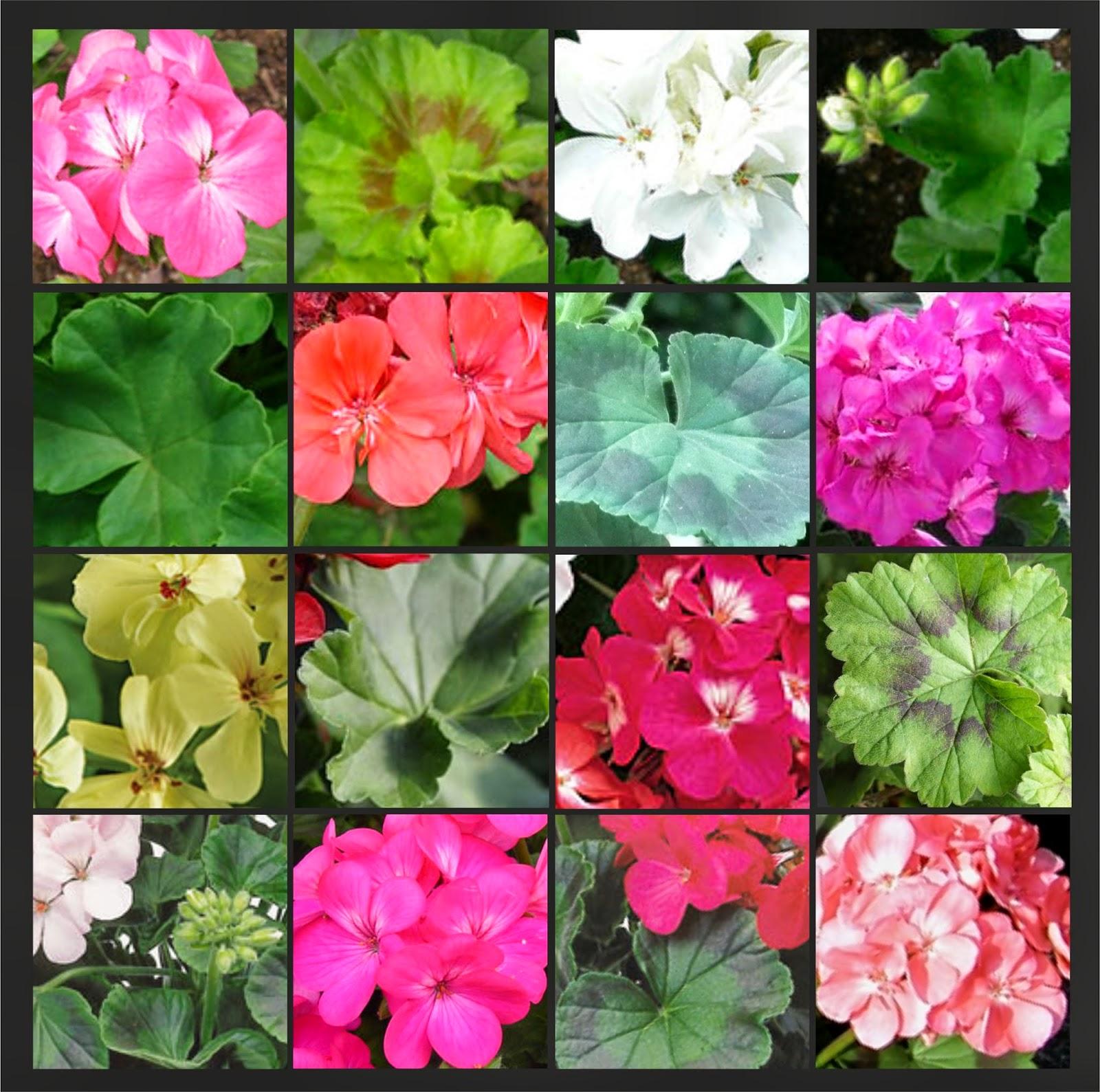 Las plantas for Informacion de plantas ornamentales